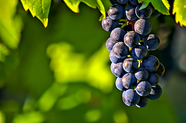 Löytyykö tänä vuonna hedelmää?